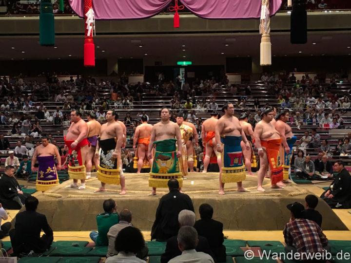 sumo (3 von 1)